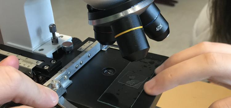 Mikroskopieren im NT Unterricht